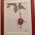 Fuchsia  by Marilyn Grimble