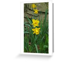 Garden Daffodils Greeting Card