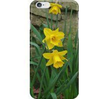 Garden Daffodils iPhone Case/Skin