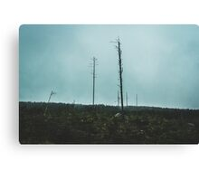 Desolate Trees Canvas Print
