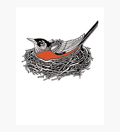 Robin Redbreast in Her Nest Illustration Photographic Print