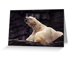 ice bear Greeting Card