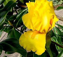 April Flowers by George I. Davidson