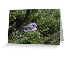 Birdy in a Bush Greeting Card