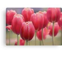 Tulips Entwined Canvas Print
