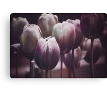 Tulips in The Dark  Canvas Print