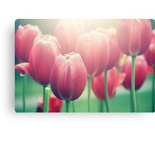Tulips in The Sun  Canvas Print