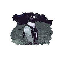 Killing it - Penguin Photographic Print
