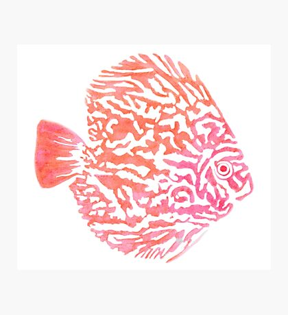 Discus fish Photographic Print