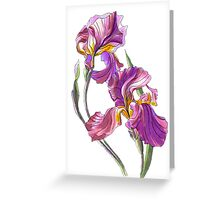 Irises-1 Greeting Card