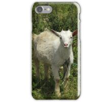 Young Goat With Short Horns iPhone Case/Skin
