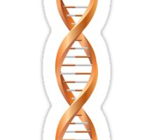 Vertical segment of orange human DNA helix Sticker