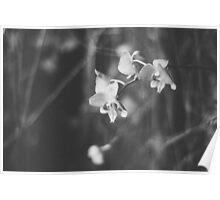 Precious petals Poster