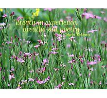 Purple Wildflower of Poets Photographic Print