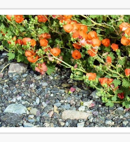 Globemallow and Gravel Orange and Gray Sticker
