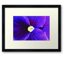 Purple and Black Pansy Framed Print