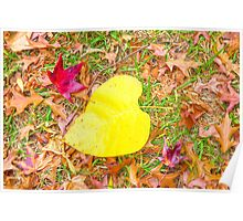 Autumn Leaves... Poster