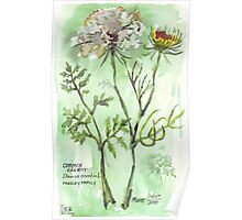 Gone to seed - Botanical Poster