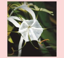 Spider lily Baby Tee