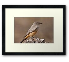 Say's Phoebe on a Fence Post Framed Print
