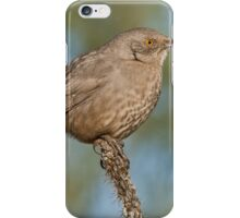 Curve-Billed Thrasher iPhone Case/Skin