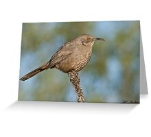 Curve-Billed Thrasher Greeting Card