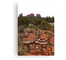 Red Rocks and Junipers Canvas Print