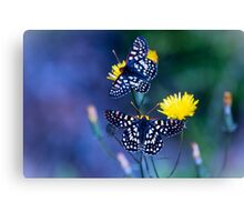 The Checkerspot Couple Canvas Print