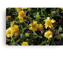 Many joyful yellow flowers in the garden. Canvas Print