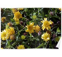 Many joyful yellow flowers in the garden. Poster