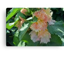 Beautiful delicate pink flowers and green leaves. Canvas Print