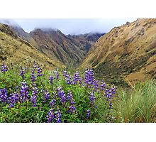 Inca Trail to Machu Picchu (also known as Camino Inca). Photographic Print
