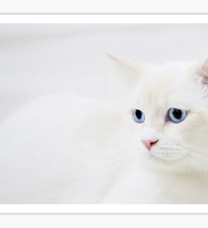 White Cat in White Sticker