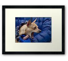 Screaming Chihuahua Framed Print