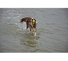 Dog in the water Photographic Print