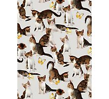 Kittens and Butterflies - a painted pattern Photographic Print