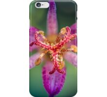 Ode to a toad (lily, silly!) iPhone Case/Skin