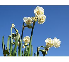 Narcissus Bridal Crown Photographic Print