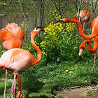 Flamingo Fight by Imagery
