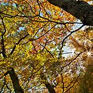 Colours of Autumn by Geoff Carpenter