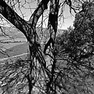 Tree at Hights by CrismanArt