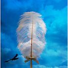 white feather and bird flying by morrbyte