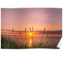wild tall grass sunset Poster