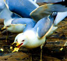Doves Feeding Sticker