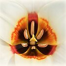 Inside of a tulip by Thea 65
