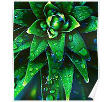 Morning Dew On Plant Poster