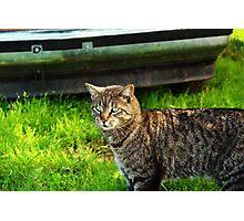 Leo The Big Cat Photographic Print