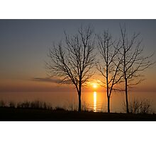 Three Trees and the Sun Photographic Print