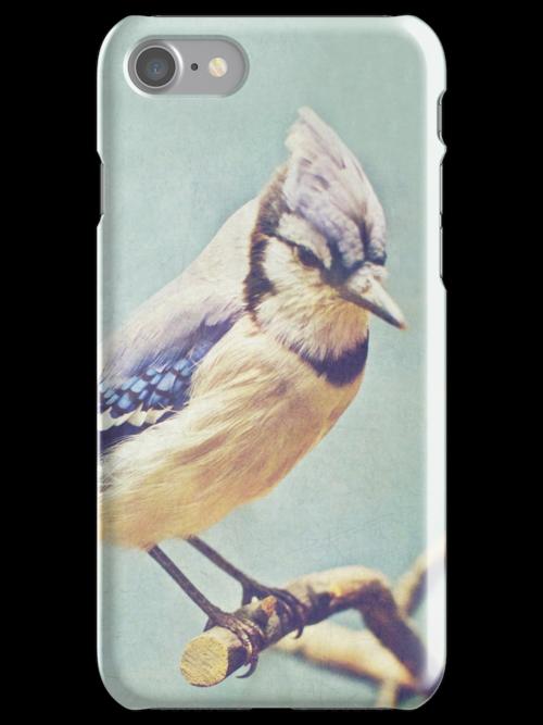 Virginia Blue Jay by Beth Thompson