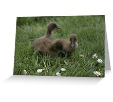 Ducklings first day out Greeting Card